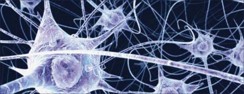 neuroscienze_-_zac-_ema[2]